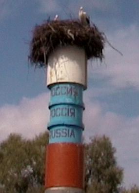 Одна   половина гнезда в России...