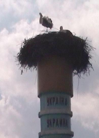 Другая половина гнезда   на Украине...